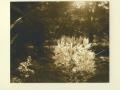 IRENA MARTENS                                                               Pigment Print :Boxed Portfolio%22Thornwillow Gardens %22 1