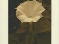 IRENA MARTENS                                                           Pigment Print:Boxed Portfolio%22Thornwillow Gardens%22 3
